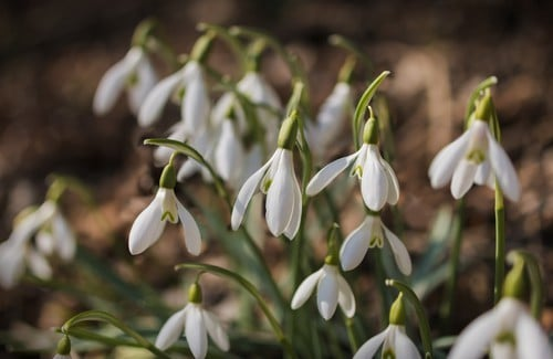 February weekday events snowdrops DP