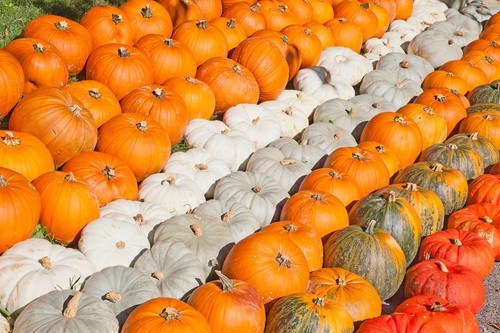 October weekend events pumpkins DP